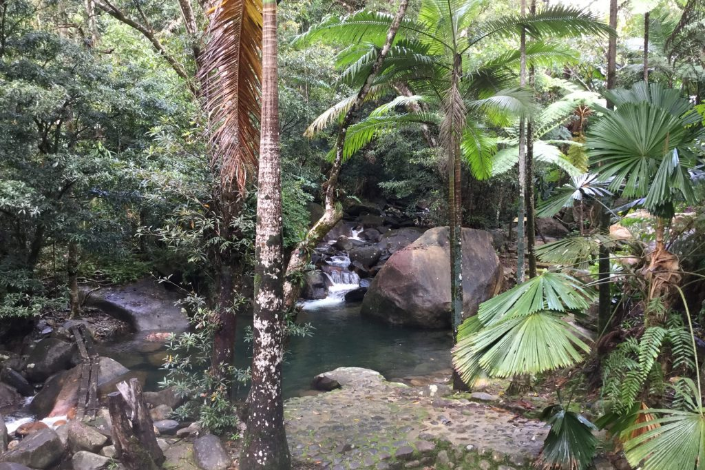 Photo - Daintree forest